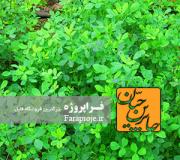 دانلود طرح جابر گیاهان داروئی در شفابخشی