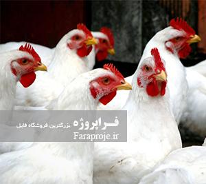 مقاله بررسی تاثير عوامل مديريتی بر صفات اقتصادی گله های مرغ مادر گوشتی