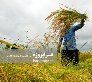 مقاله بررسی روشهای مختلف آبياری بر روی برخی صفات مرفولوژيک و فيزيولوژيک برنج