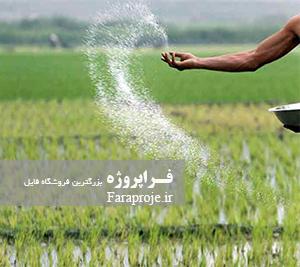 مقاله زراعت برنج