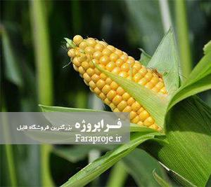 گزارش کارآموزی زراعت و اصلاح ذرت