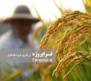 مقاله تاثير شرايط اقليمی بر كشت برنج در منطقه ميانه