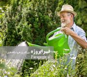 گزارش کارآموزی آفات و بيماری گياهان نگهداری فضای سبز